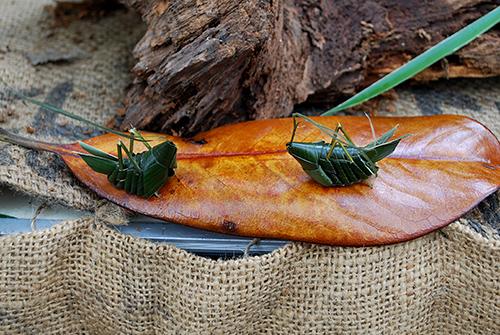 葉の昆虫1
