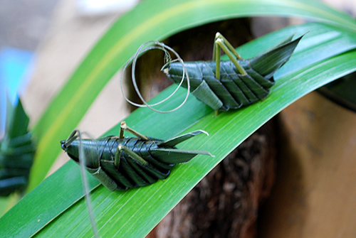 葉の昆虫3