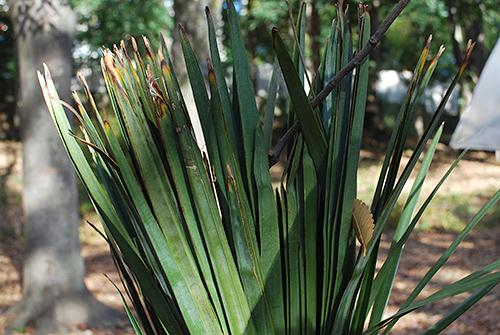 葉の昆虫5