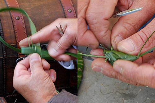 葉の昆虫6