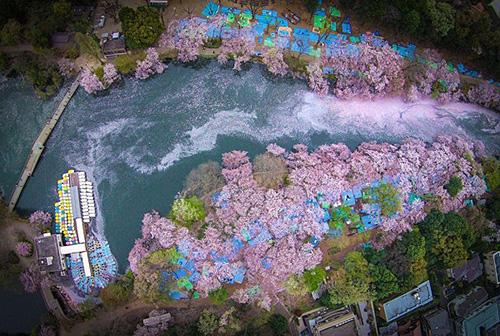 上空から捉えた井の頭公園