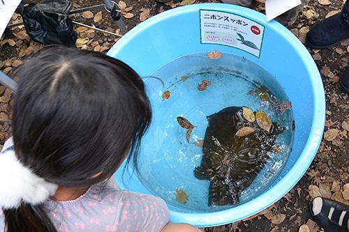 井の頭公園弁天池かいぼり