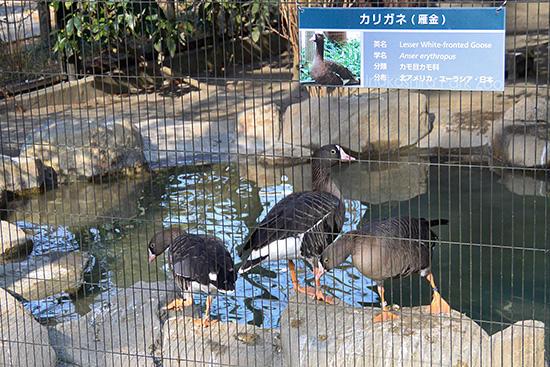 InokashiraParkZoo4.jpg