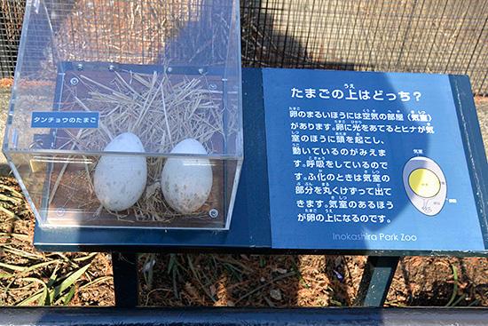 InokashiraParkZoo7.jpg
