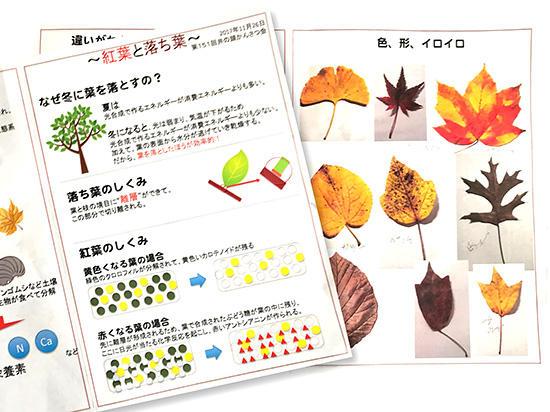 資料〜紅葉と落ち葉〜