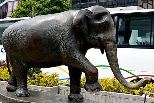 象のはなこ